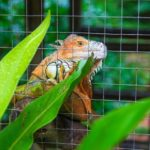 Top 4 Best Iguana Cage Reviews 2019