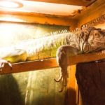 best-heat-lamp-for-iguana-reviews