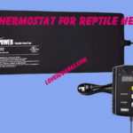 Best Thermostat for Reptile Heat Mat
