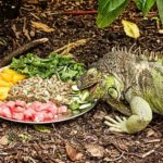 Best Food For Iguana