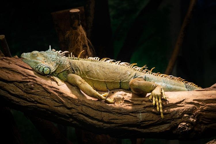 Best Hammock for Iguanas