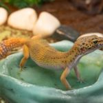 Best Reptile Water Bowls