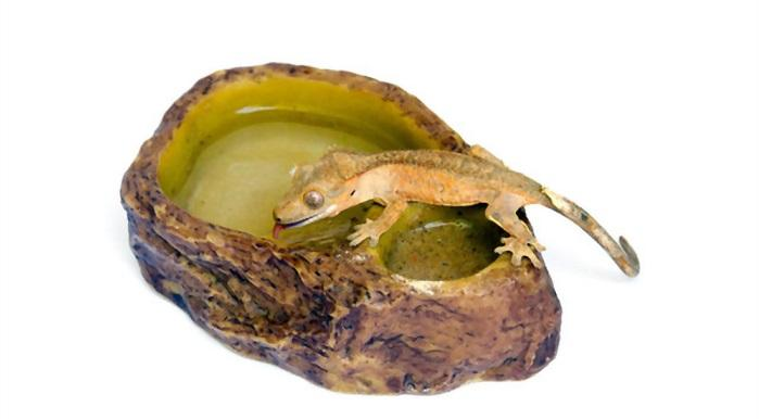 Top 5 Best Reptile Water Bowls & Food Dishes